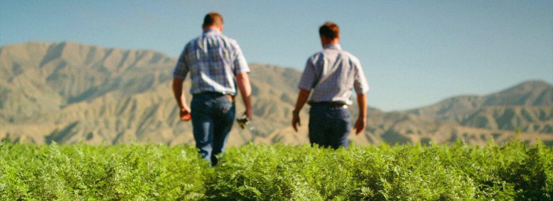 Digital Attic Portfolio - Cal Organic Farms Content